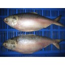 Hilsha Fish - Whole Per Kg(Depending On Weight)