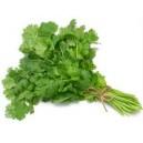 Coriander Leaf / Dhania Pata (Green) Fresh / Frozen